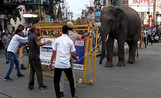 """فيل يقتل 8 أشخاص """"دهساً"""" أثناء بحثه عن المياه"""