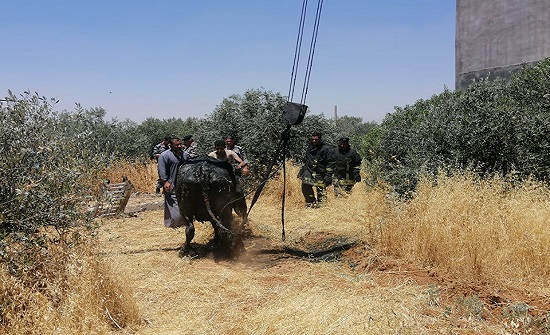 بالصور :الدفاع المدني ينقذ بقرتين من داخل حفرة في اربد