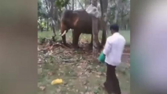 """انتقام فيل.. أطاح برجل """"مخمور"""" حاول التحرش به """"فيديو"""""""