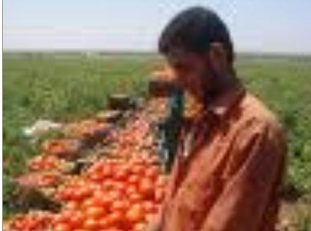 وزيرا الزراعة والصناعة يشاركان بورشة تتعلق بالصادرات نظمتتها جمعية مصدري الخضار والفواكة