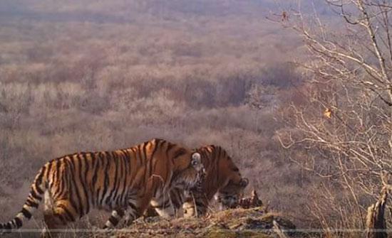 مشاهد تخطف الأنفاس لحيوانات في محمية طبيعية (فيديو)
