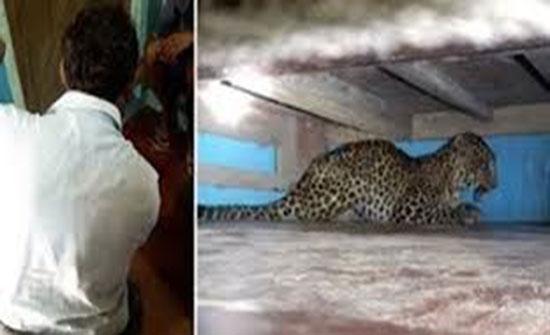 نمر بري يختبئ تحت سرير طفل يثير ذعر عائلة (فيديو)