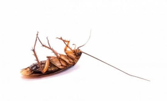 لا حاجة للمبيدات.. طُرق طبيعية للتخلص من الصّراصير!