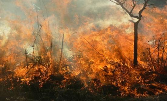 تزايد نسبة الاعتداءات والحرائق على الغابات في عجلون