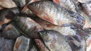 اتلاف اسماك تباع في بكبات في اربد