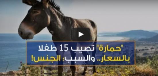 """[شاهد] واقعة صدَمَت المغربيين .. إصابة 15 طفلاً بـ""""السّعار"""" بعد ممارستهم الجنس مع أنثى حمار!"""