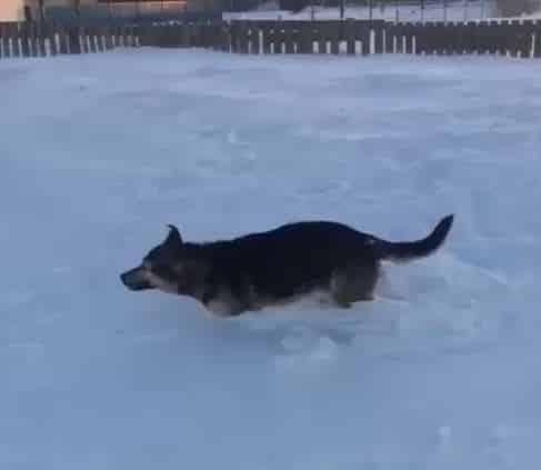 مشهد مروع.. موجة برد قوية تجمِّد الحيوانات في مكانها بكازاخستان