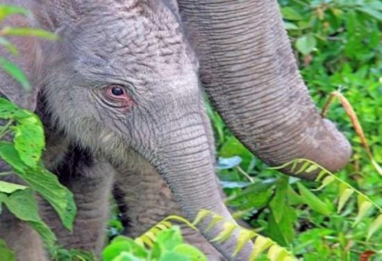 تطوير حبوب منع حمل للرجال من 'سم الفيلة'!