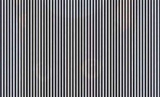 خدعة بصرية.. هل يمكنك رؤية الحيوان في الصورة؟