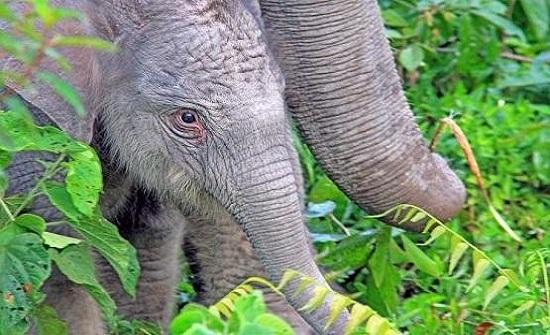 حبوب (منع حمل) للرجال من سم الفيلة!