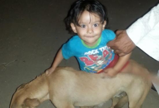 قضيّة شغلت مصر.. 11 محامياً تصدّوا للدفاع عن كلب!