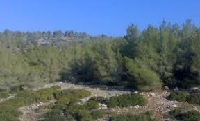 """""""الزراعة"""": 6ر1 مليون دونم مساحة الاراضي الحرجية في المملكة"""