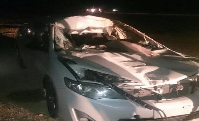 بالصور .. الطفيلة : 3 اصابات اثنتان بالغتان جراء اصطدام مركبة بجمل