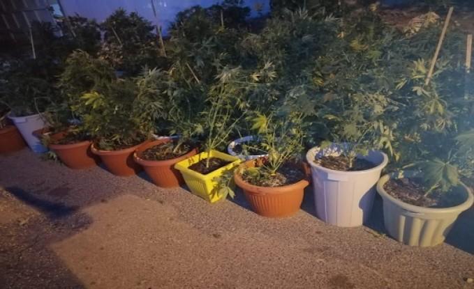 بالصور :  القبض على 3 اشخاص استخدموا احد المنازل لزراعة اشتال الماريجوانا