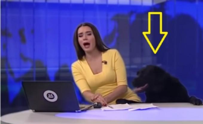 كلب يقتحم نشرة إخبارية على الهواء..ويقفز فوق مكتب المذيعة!