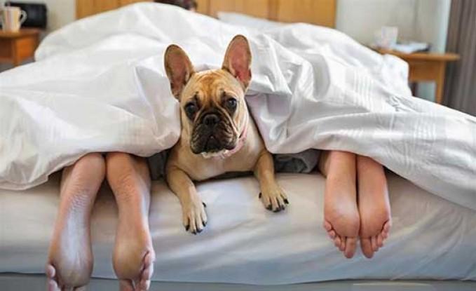 ندى : بيخلي الكلب ينام معنا.. وفي الآخر عضني !!