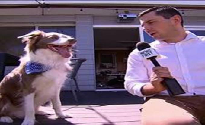 مراسل يجري مقابلة طريفة مع كلب ولم يتوقع ما حدث