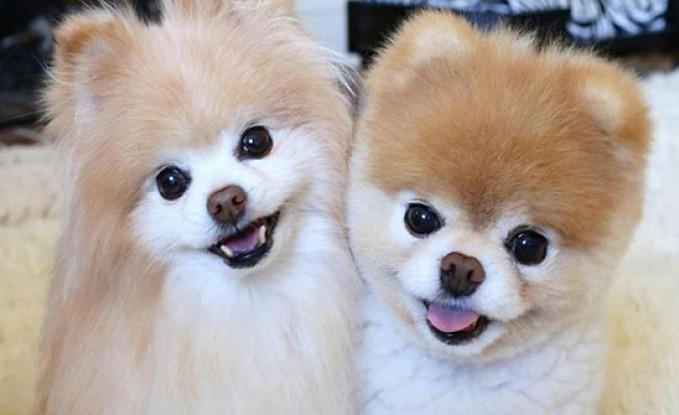 """بالصور… وفاة """"ألطف"""" كلب في العالم بسبب الحزن!"""