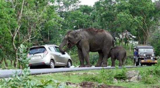 2803647ca2518 بالصور  فيل جائع يلتهم حقيبة سائحة حاولت التقاط سيلفي معه - المدينة ...