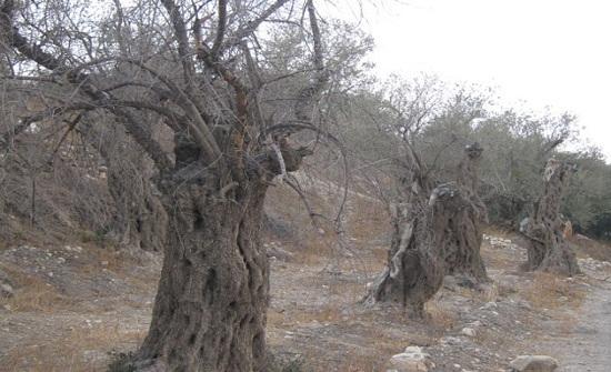 حملة لإزالة الاشجار المتكسرة بالطفيلة