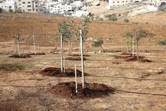 الأمانة تفتتح المرحلة الثانية من متنزه خالد بن الوليد في منطقة ماركا