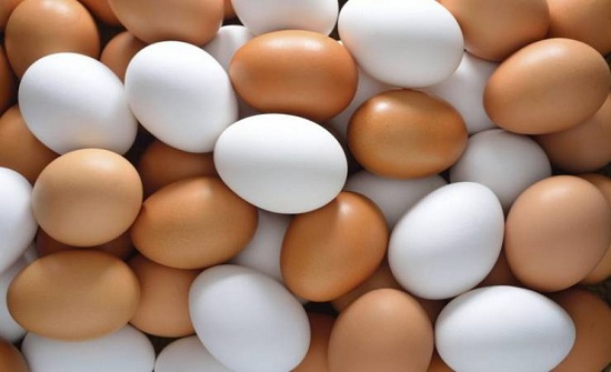 ضبط 700 طبق بيض فاسد في مأدبا