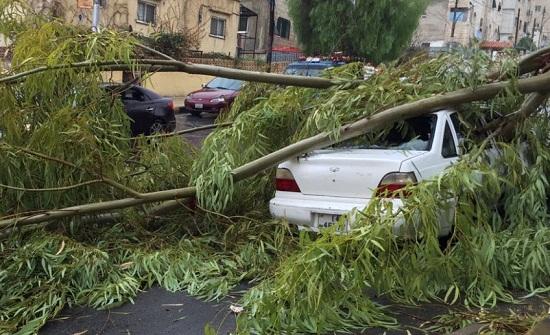 بلدية الزرقاء تقص وتزيل الأشجار التي سقطت بتأثير الرياح