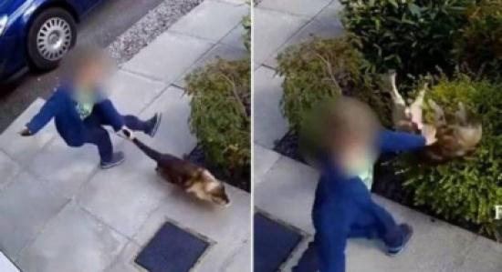 بالفيديو: طفل عذّب قطة برميها وركلها بشدة .. لكّنها عاقبته على طريقتها الخاصة!