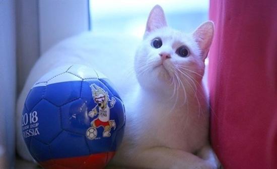 قط أصم من بين أشهر الحيوانات التي تتنبأ بنتائج كأس العالم