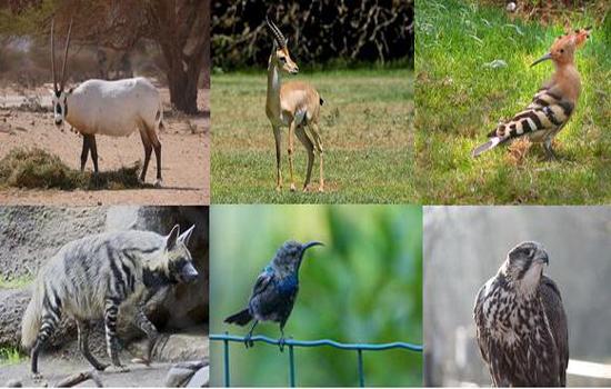 10 كائنات نادرة إختارت الأردن موطناً لها ( صور )