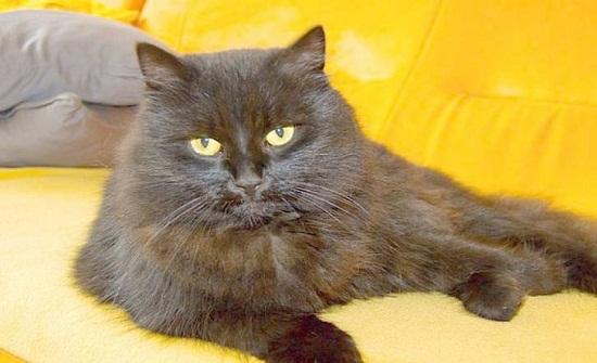ما تفسير رؤية القطط في المنام؟