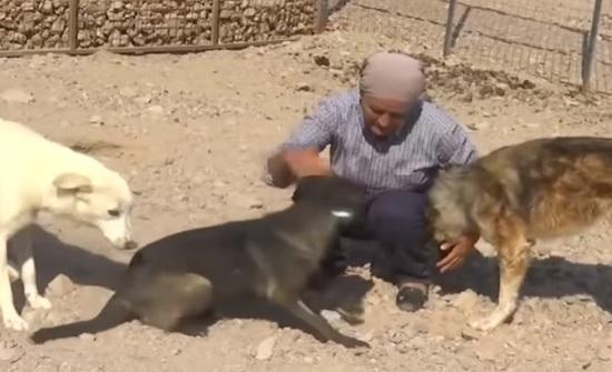 فيديو : رومانية تفتح ملجأ للكلاب الضالة في العقبة
