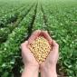18018 أردنية يعملن في مجال الإنتاج النباتي والحيواني