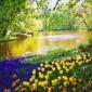 صور: حديقة كيوكينهوف في هولندا اجمل حديقة في العالم