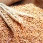 الفحوصات المخبرية النهائية تؤكد سلامة شحنة القمح الرومانية