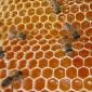 """""""الزراعيين"""" تنظم محاضرة عن ظاهرة اختفاء النحل"""