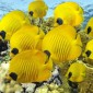 أجمل اللقطات لأعماق البحار والمخلوقات البحرية