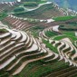 أطول حقل أرز في الصين