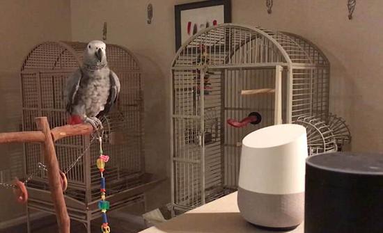 بالفيديو: رد فعل ببغاء نفذ روبوت أوامره