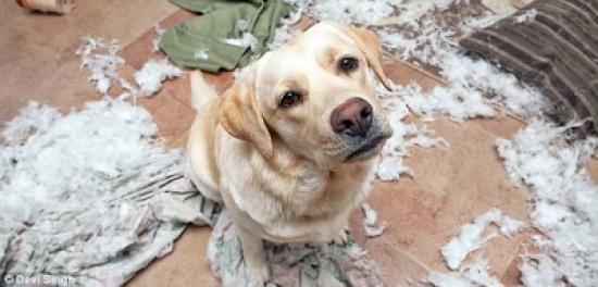 بالصور.. كوارث فعلتها الحيوانات في غياب أصحابها