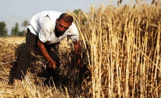 الأردن يشتري 50 ألف طن من القمح في مناقصة