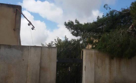أشجار تهدد سلامة طالبات مدرسة بلواء بني كنانة