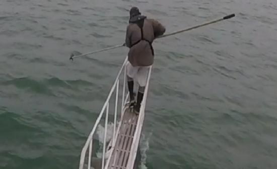 بالفيديو : قرش أبيض يقفز من الماء لعض قدم رجل