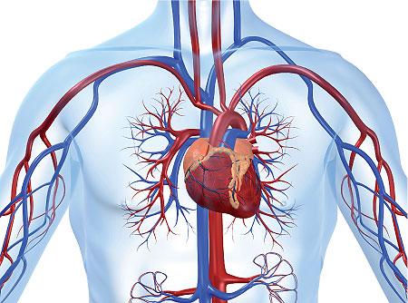 اختتام برنامج البحث العلمي عن أمراض القلب والشرايين