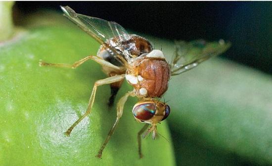 محاضرة: حراثة الارض بالشتاء انجع سبل مكافحة ذبابة الزيتون