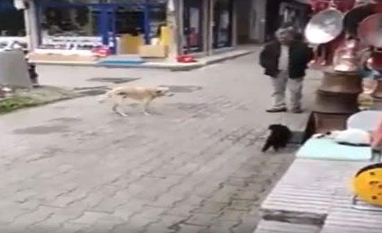 رد فعل غير متوقع لقطة هاجمها كلب (فيديو)