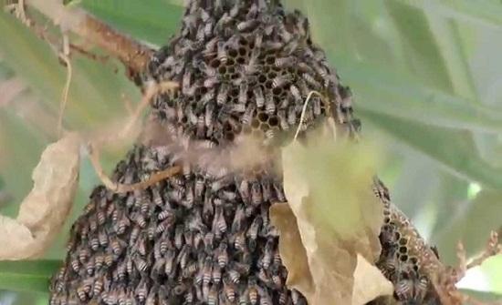 الشرطة الأميركية تلقي القبض على مراهقين بتهمة قتل نصف مليون نحلة!