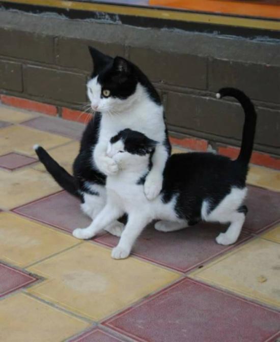 بالصور.. الامومة عند القطط