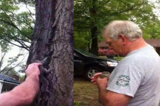 بالفيديو: قط يهاجم سنجابًا ويخطفه هاربا أمام أنظار صاحبه