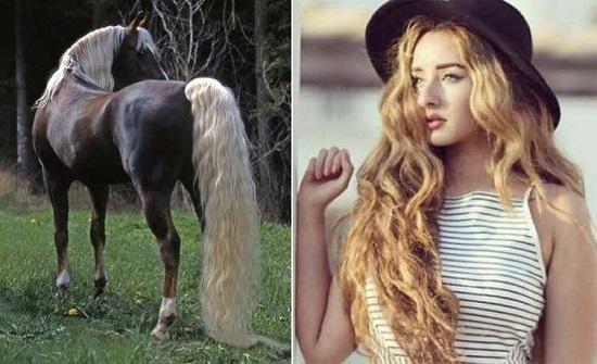 بالصورة : احمد فهمي يقارن بين هنا الزاهد وهذا الحصان